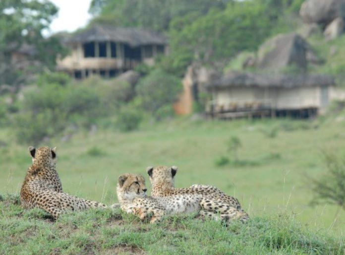 Serengeti en chimpansee tracking – 8 nachten