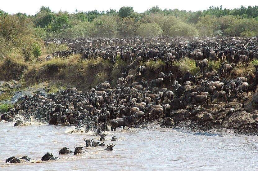 Waterplaats met wilde beesten