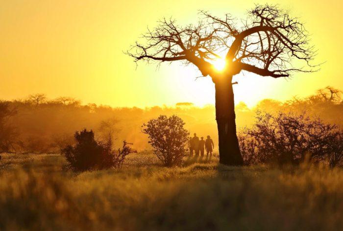 Wandelsafari in Afrika – Safari op zijn best