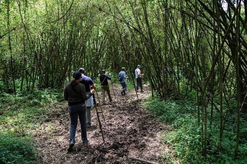 Mensen wandelen door het bos
