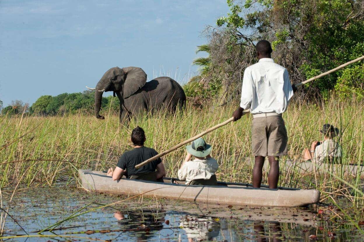 Vier mensen in een kano in de delta met op de achtergrond een olifant